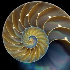 Golden Ratio nautilus shell