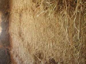 Close Up of Cut Edge of Straw Bale