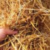 short straw bale