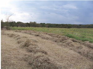 loosely cut straw