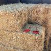straw bale hooks
