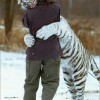 White-Tiger-hugging
