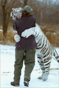 white tiger hugging man