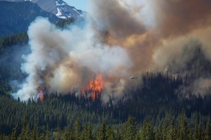 Wildland Fire spreads through the forrest