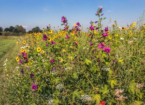 Flowers on a green roof can create biodiversity