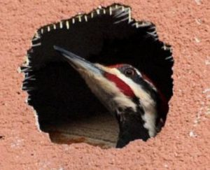 bird in plaster wall