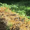 growing plants in straw bales