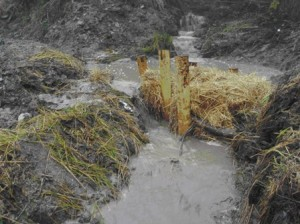 Straw bales used to slow contamination from Gulf Oil Spill